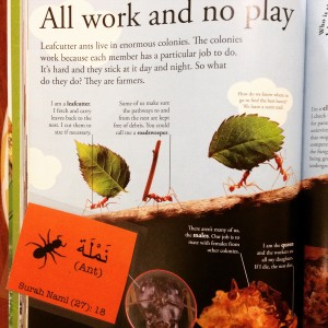 story of ant suleiman for kids